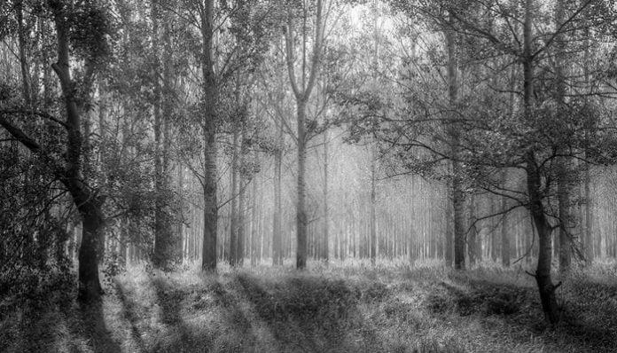 Sabahattin Ali Hikayeleri-Bir Orman Hikayesi